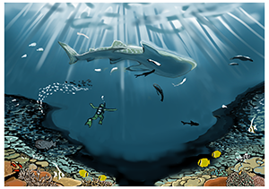チネンさん「サンゴ礁とジンベエザメ」